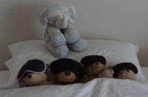 Bears hibernating