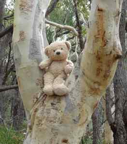 Lost in bush_Dwight lookout