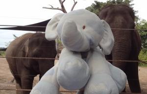 Elephants and Hephie