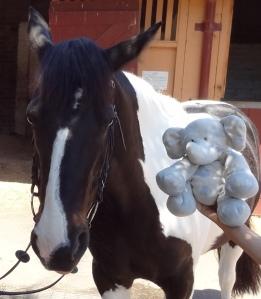 Horse_Hephie