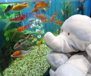 Fish tank_Hephie